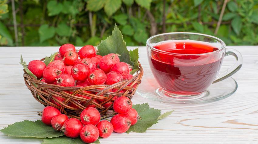 magas vérnyomás csipkebogyó gyümölcs