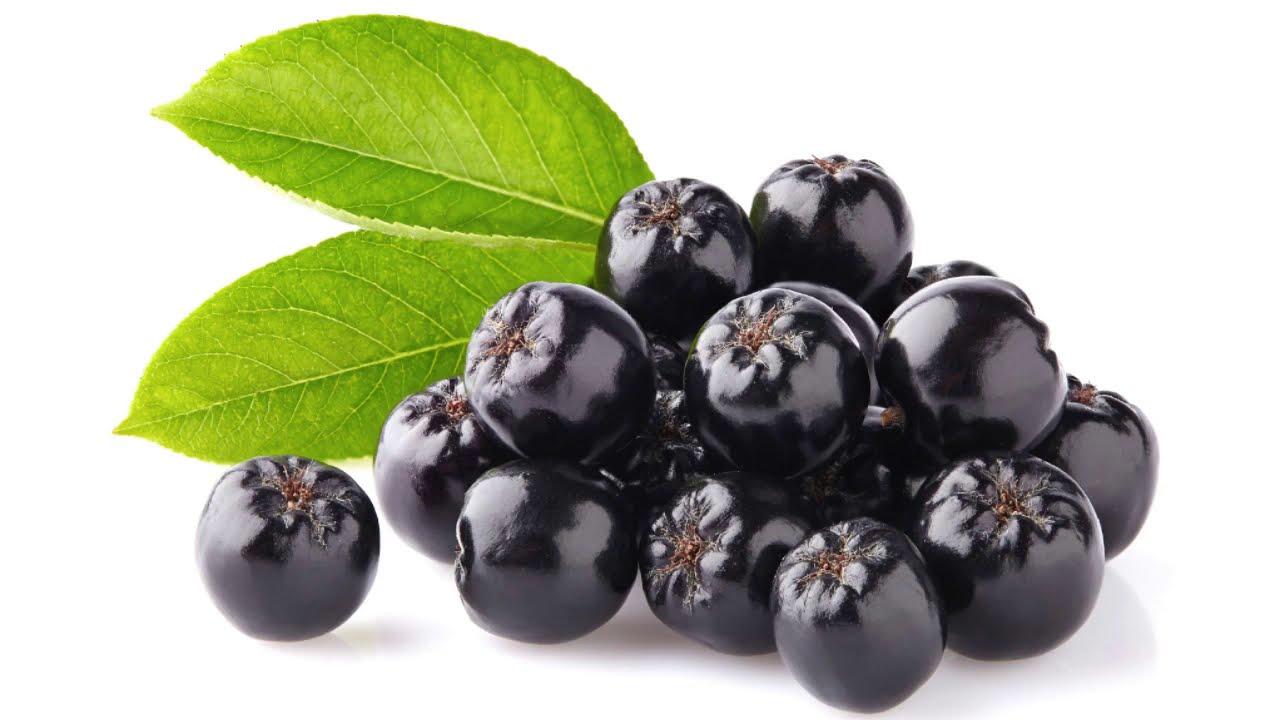 Fekete berkenye – az egészség bogyója | Gyógyszer Nélkül
