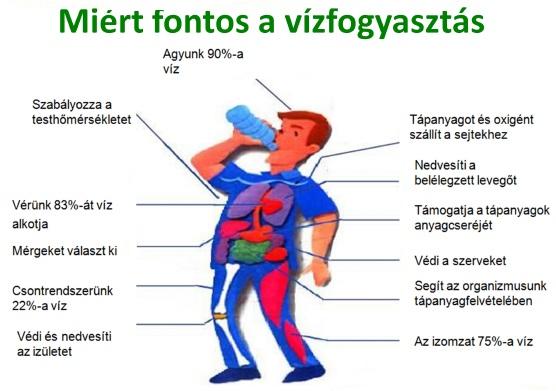 Magas vérnyomás | Dr. Tiszta Víherbaria-levendula.hu