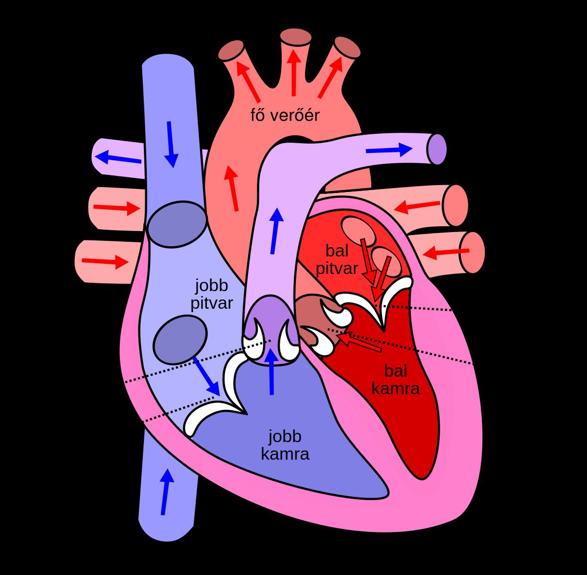 magas vérnyomás prospektusok hogyan kell szimulálni a magas vérnyomást smad