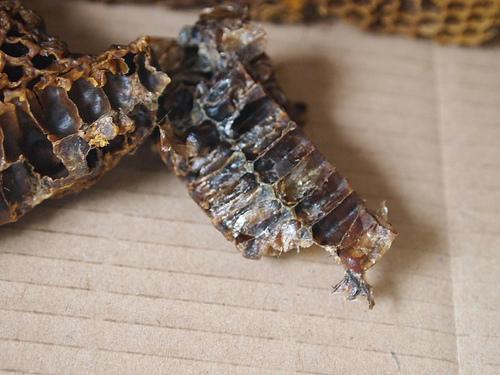 méhpempő a magas vérnyomás kezelésében hiperadrenerg hipertónia kezelése