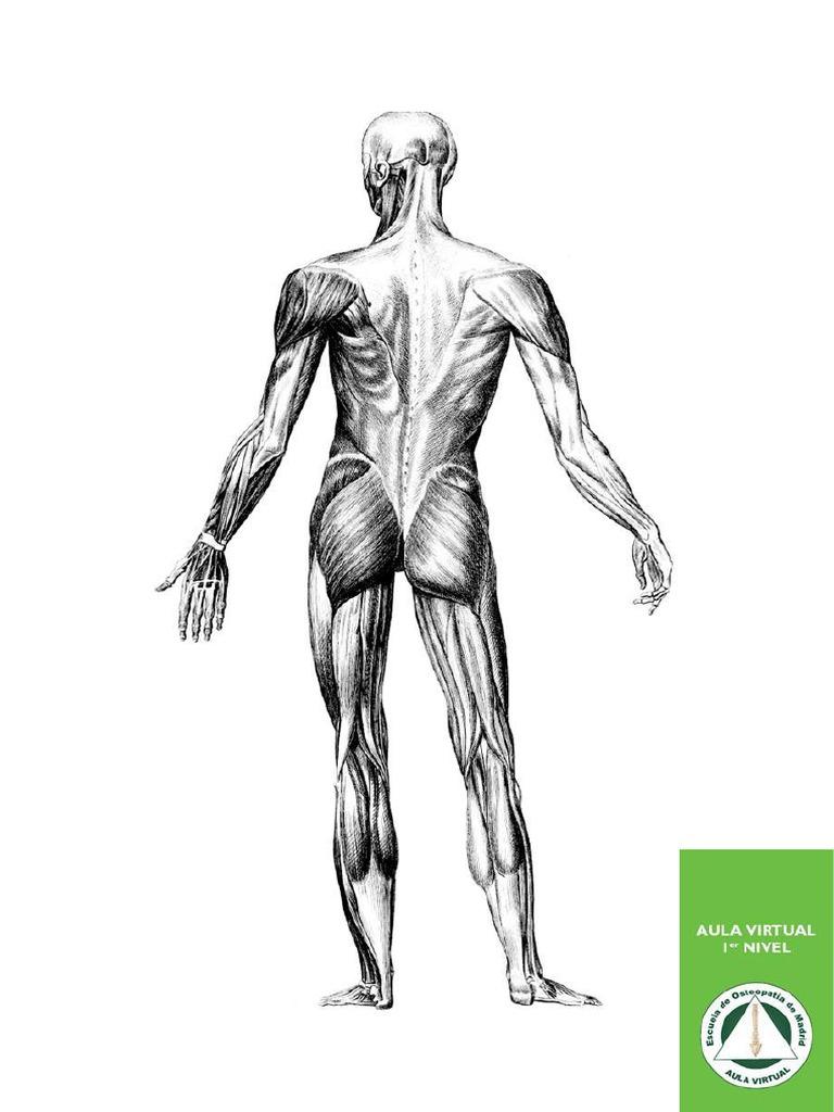 deltoid hipertónia)