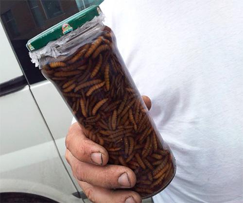 A viaszmoly lárvák tinktúrája: gyógyászati tulajdonságok, cél és használati utasítás