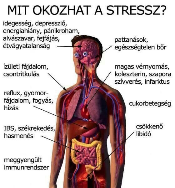 Vérnyomáscsökkentés az elme segítségével