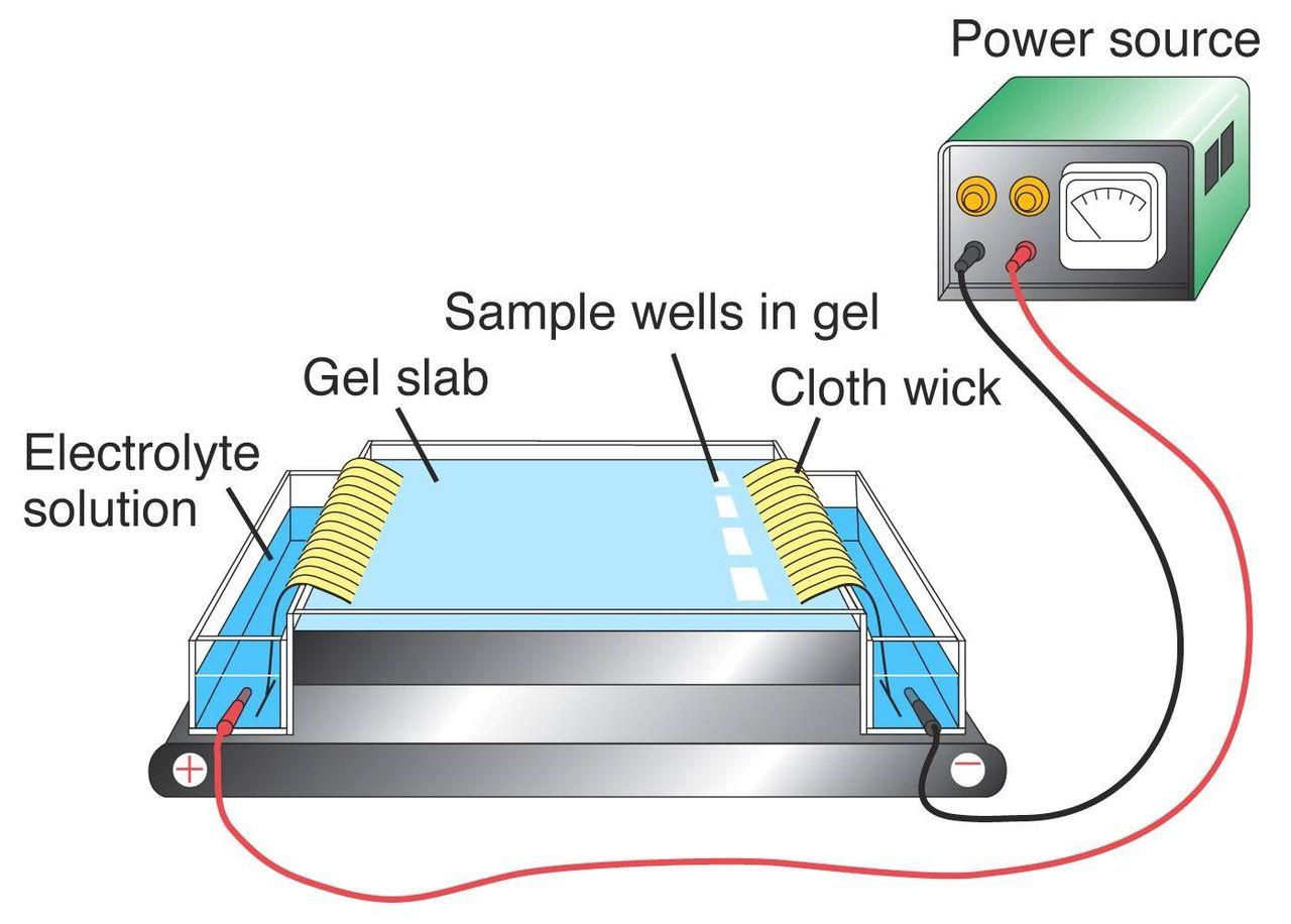 Gyógytorna magas vérnyomás esetén - elektroforézis magas vérnyomás esetén