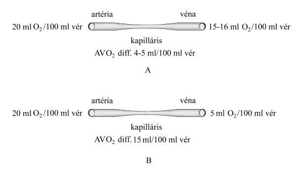 Laboreredmények - Glükóz terhelés (OGTT)