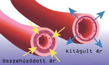 hogyan kezdődik a magas vérnyomás eperfa a magas vérnyomás kezelésében