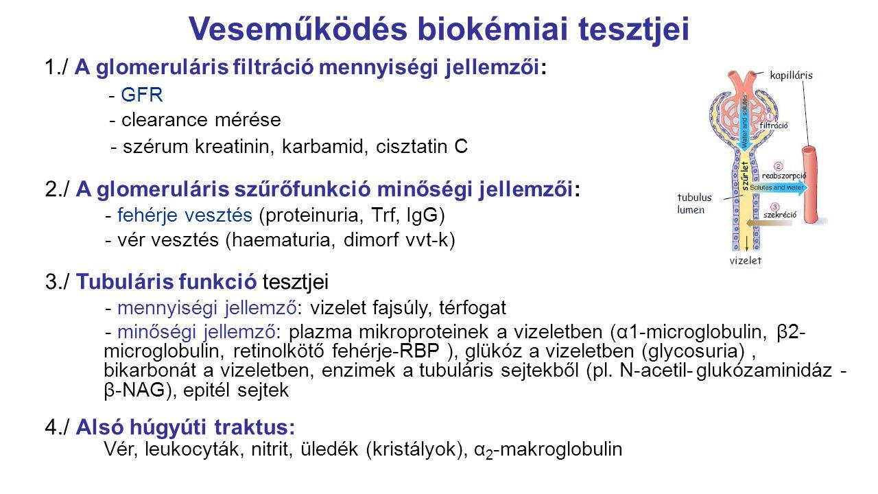 karbamid és kreatinin hipertónia)