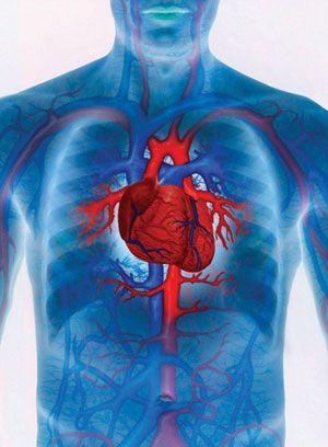 magas vérnyomás, hogyan lehet megtisztítani az ereket sürgősségi ellátás hipertónia algoritmus