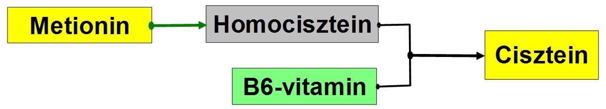 homocisztein és magas vérnyomás A pokol szintje a magas vérnyomás szakaszai szerint