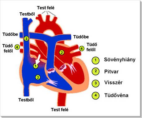 magas vérnyomás szívhibákkal karbamid és kreatinin hipertónia