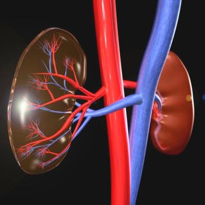 magas vérnyomás a veseartéria szűkülete miatt)