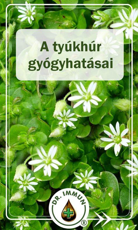 növényi gyógyszer magas vérnyomás ellen 2 fok)