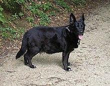 magas vérnyomás kutyák tüneteinek kezelése