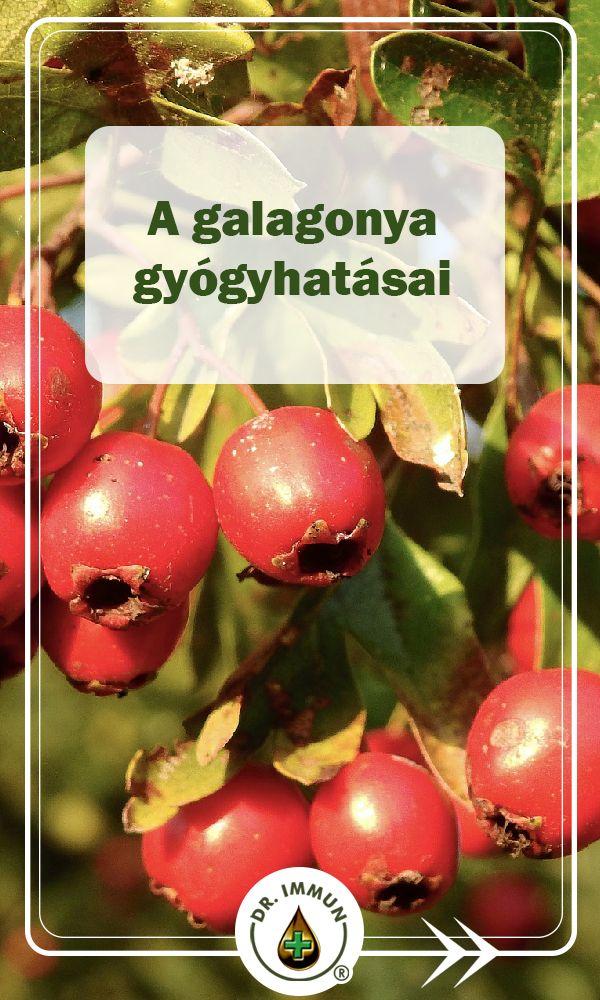 galagonya tea hatása a vérnyomásra betegség magas vérnyomás hogyan lehet gyógyítani
