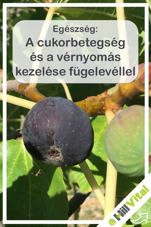 Naturland : Gyógynövény ismertető N - Sz